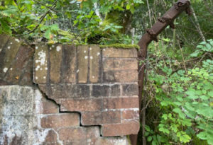insurance for japanese knotweed wall damage
