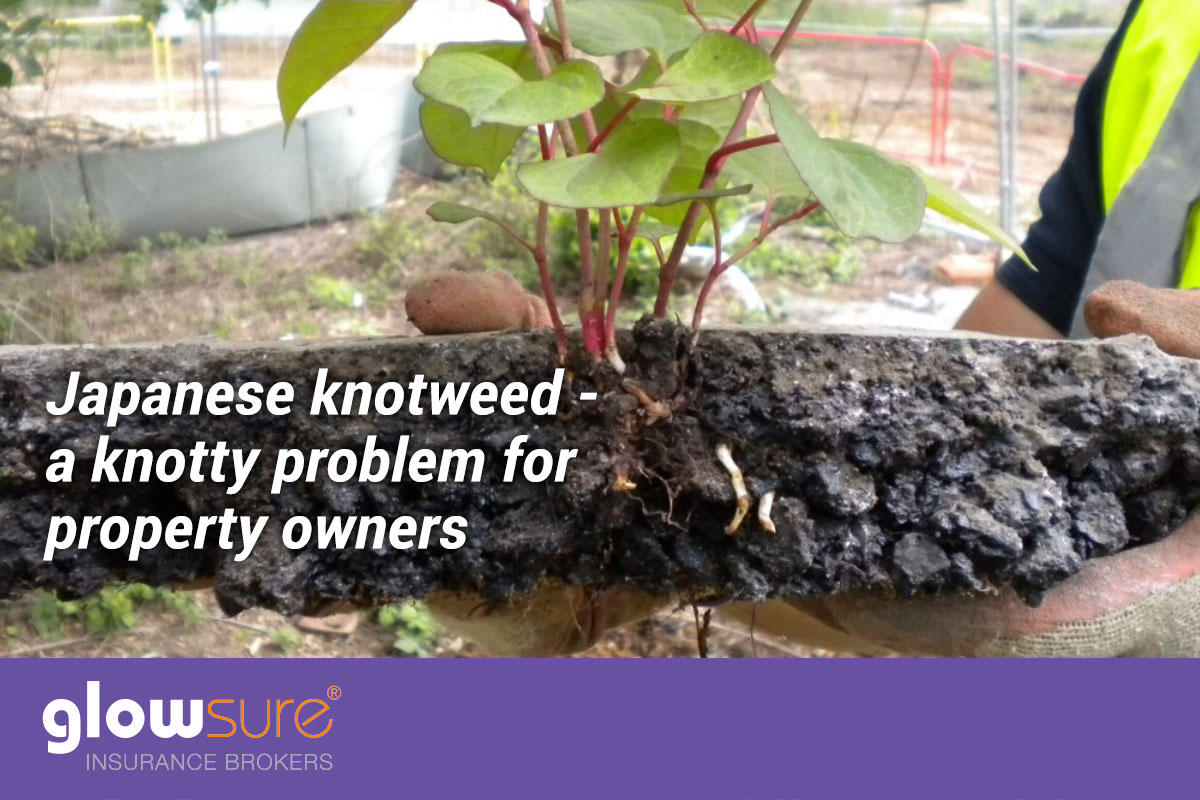 japanese knotweed insurance